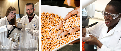 Collage of researchers running experiments on corn kernels.